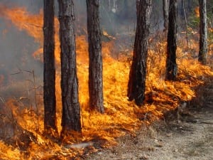 Fire Damage in Forest
